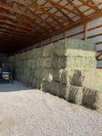 Farm / Ranch | Alfalfa