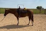 Livestock | Horses